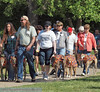 2013 Elk Grove K9 Cancer Walk 175