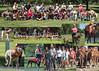 Greyhound Collage 1 5x7 copy