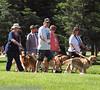 2013 Elk Grove K9 Cancer Walk 116a