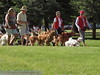 2013 Elk Grove K9 Cancer Walk 113
