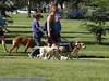 2013 Elk Grove K9 Cancer Walk 144