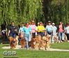 2012 K9 Cancer Walk 067