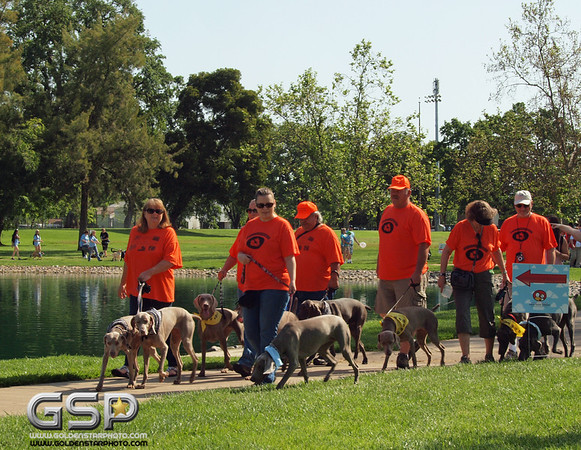 2012 K9 Cancer Walk 106