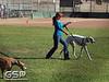Greyhound Play Day 108