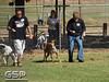 Greyhound Play Day 106