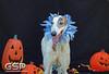 Greyhound Play Day 408a