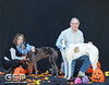 Greyhound Play Day 394a