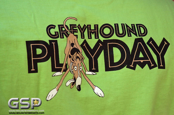 Greyhound Play Day 006