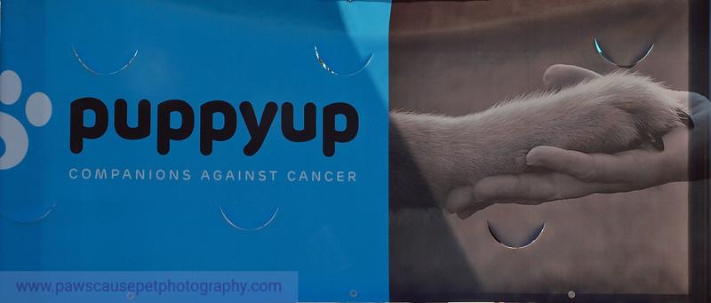 PuppyUp1