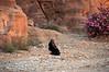 Bedouin Woman at Petra