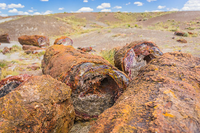 The Petrified Forest and Painted Desert