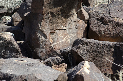Yucca plant pod