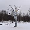 Lake Onega Embankment - Wishing Tree