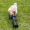 Cameradog