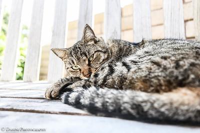 Jeddy Kitty