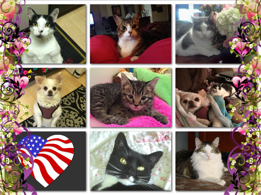 Pet Family Collage