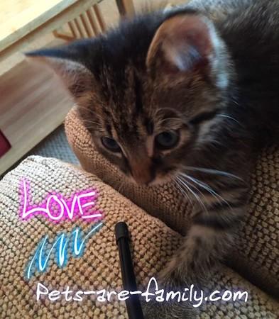Love Cats My Rocky