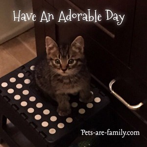 Kittens Adorable Day