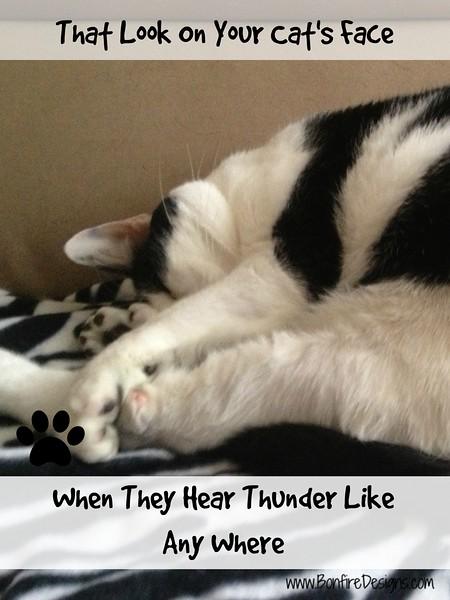 Sammy Cat Thunderstorm