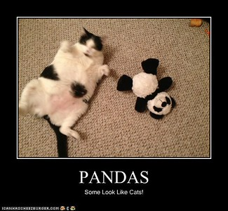 Panda Cats