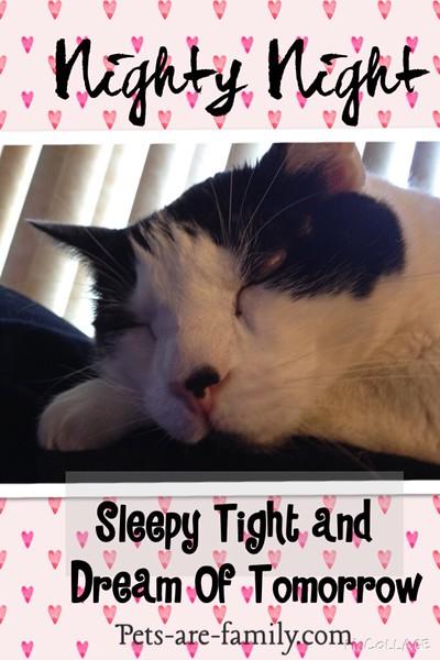 Sleep Tight Cats