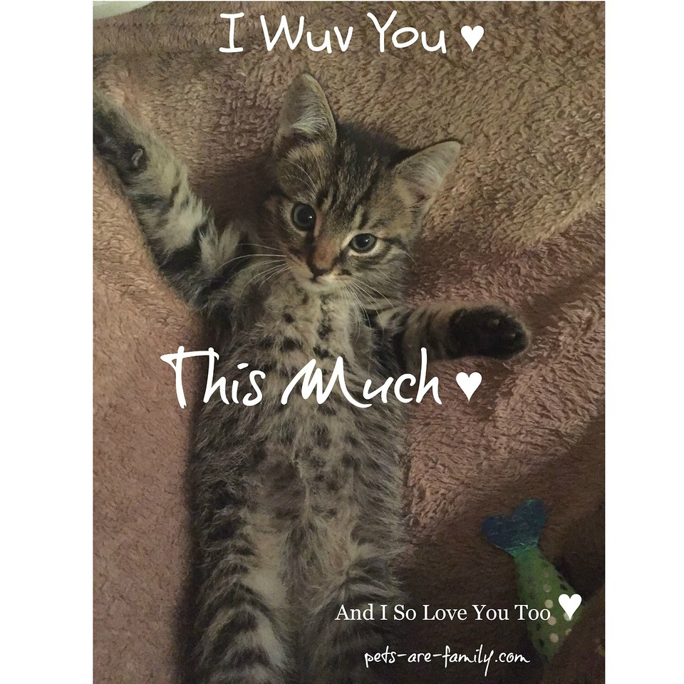 Love You Baby Cat