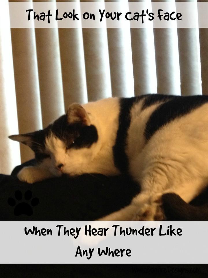 Storm Cat Nap