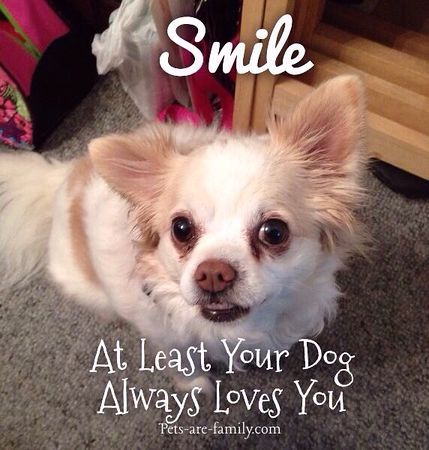 Smile Dogs Love You