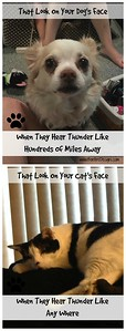 Pets Cats, Dogs and Thunderstorms