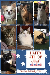 Happy 4th Of July Pets Poster