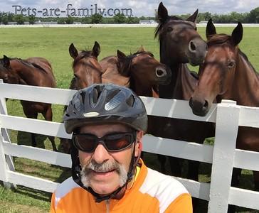 Biking and Horses