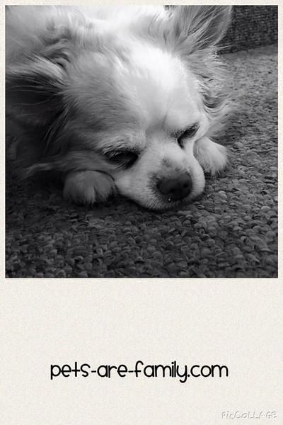 Bella Good Nite Puppy
