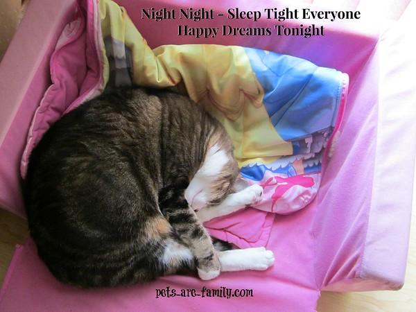 Night Night Kitty Cat