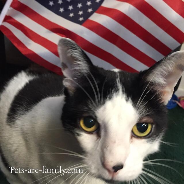 Patriotic Cats