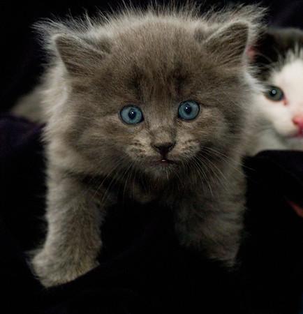 Kittens 077