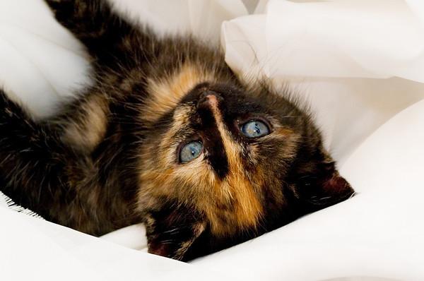 Kittens 206