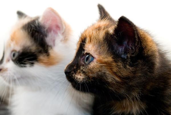 Kittens 128