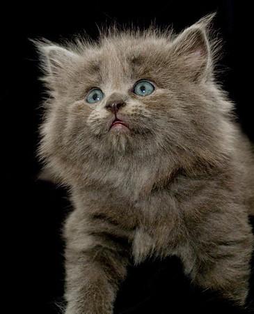 Kittens 080a