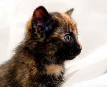 Kittens 149