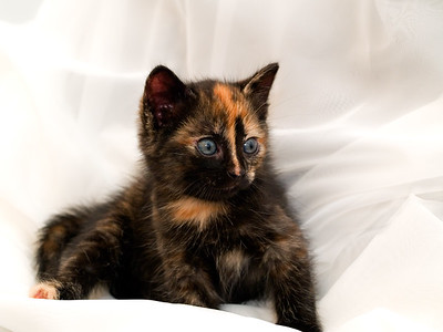 Kittens 160