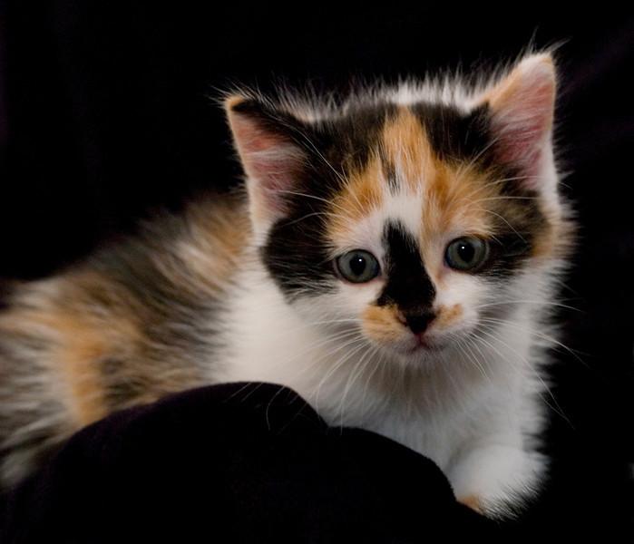 Kittens 102a
