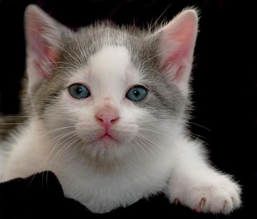 Kittens 053a