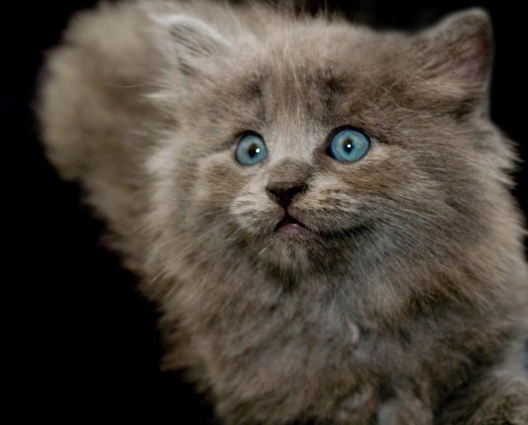 Kittens 083