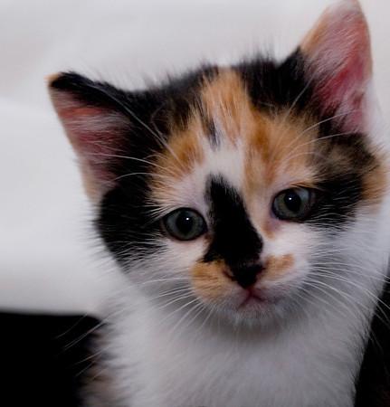 Kittens 123