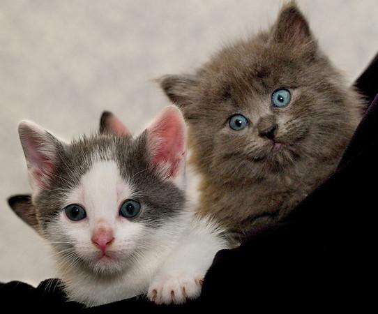 Kittens 043a