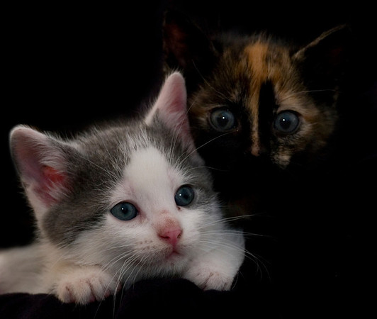 Kittens 117a