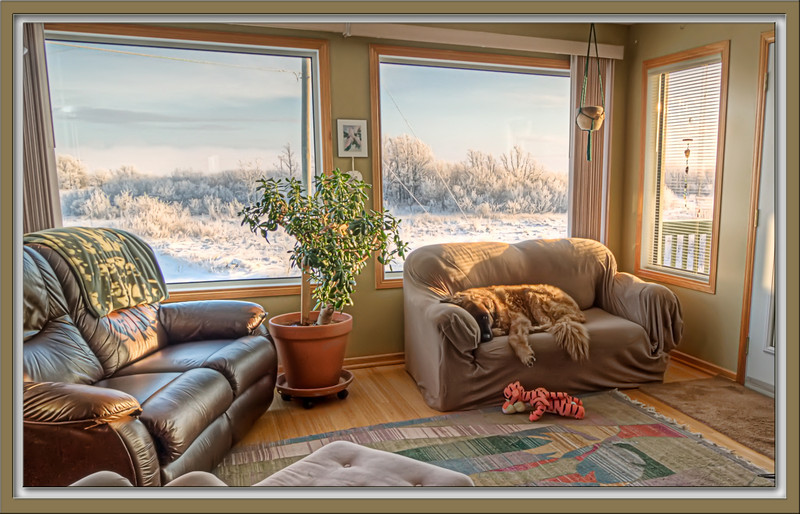 The view from here ... As you can see, Bruno is thoroughly enjoying the lovely view out the window...:-)) this is another HDR shot, which is best viewed in really small sizes as it really didn't 'melt' together very well! We're in the deep freeze here which makes it so very difficult to use the camera outside - not only do fingers freeze, but also batteries & memory cards - so, it's going to be challenging to learn to look where it's warm for the daily shot!  I am totally stunned by your reaction to my 'Lavender' shot yesterday...!  It is such an honour to reach the #1 spot in this community of incredibly talented photographers, thank you so very much! Hope you are enjoying wonderful weather & a lovely Sunday....:-)) 12.12.10
