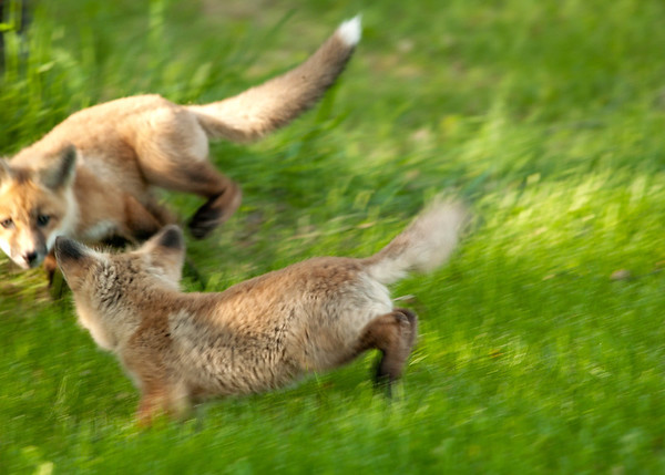 When they played together, they were so incredibly quick, there was no way to get a good shot.... so I figured a blurry shot was better than none at all.... :-))