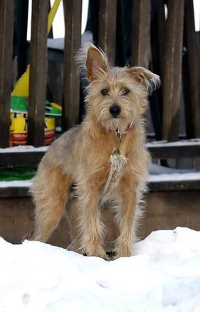 Travis, Bruce Keating's dog