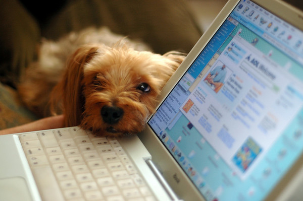 "Before Facebook, there was email.  This pup is listening as a message from his vacationing ""mother"" is about to be read aloud.  Really."